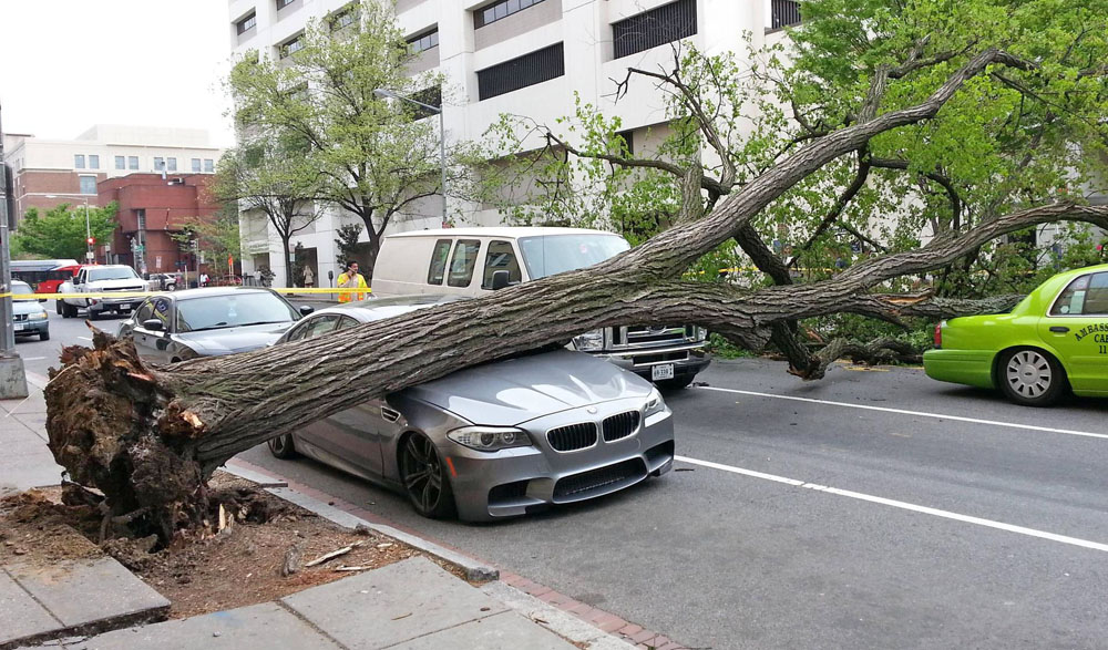 Ouchhh Tree Crushes M5
